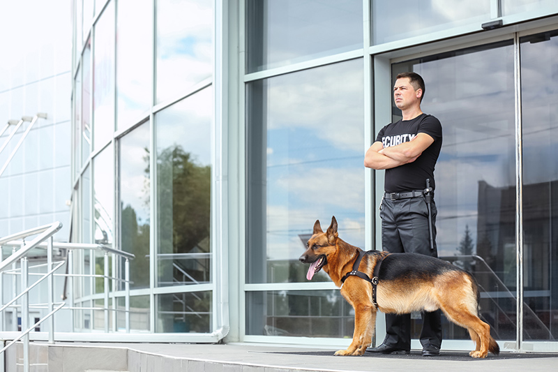 Security Guard Cv in Milton Keynes Buckinghamshire